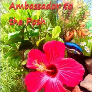 Other - I'm A Posh Ambassador!